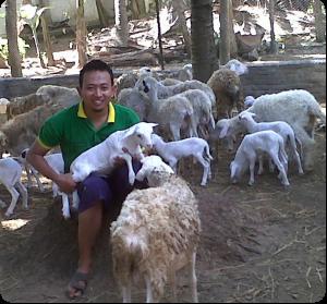 Pembesaran Domba/Kambing Dapur Aqiqah Bandung